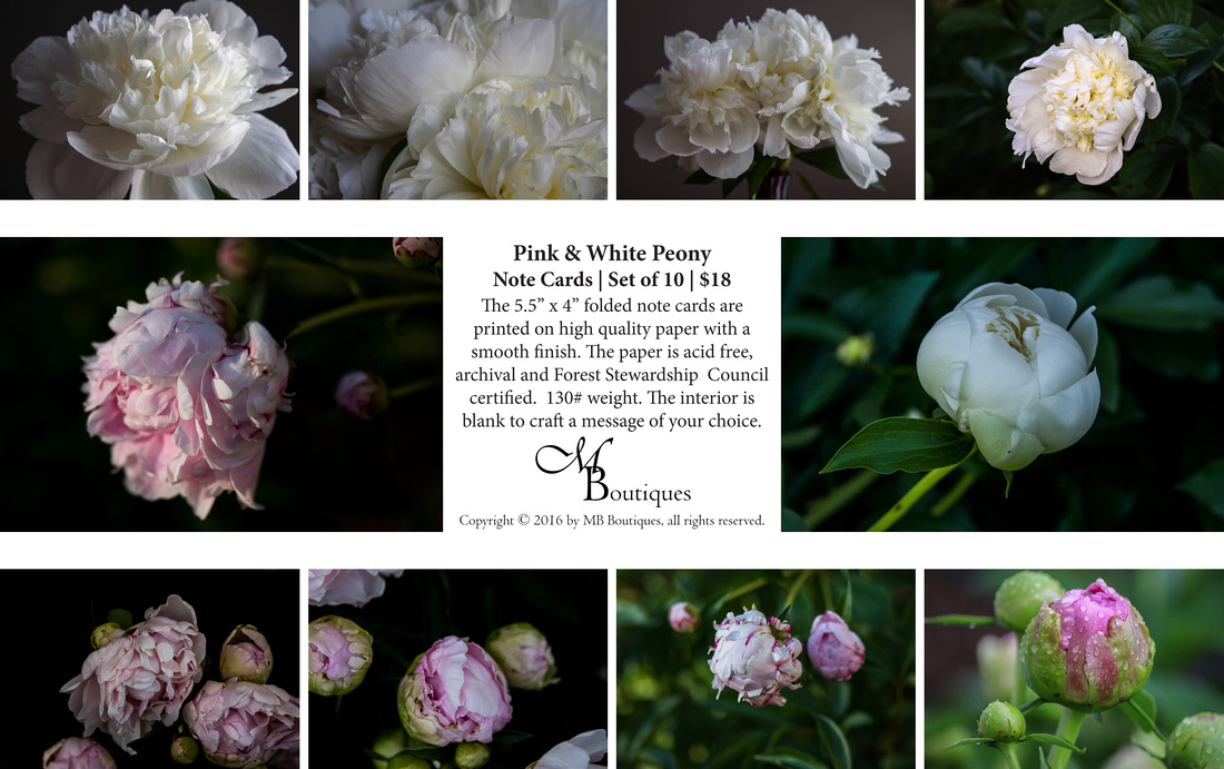 Pink & White Peony Note Cards | Set of 10 | $18