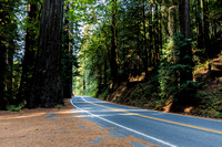 CA | Redwood Forest