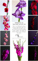 Gladiola Fine Art Note Cards | Set of 10 | $18